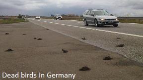 Dead Birds in Germany
