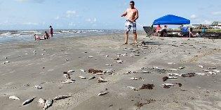 Dead Fish on Beaches
