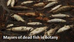 Dead Fish Botany