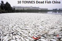 Dead Fish China