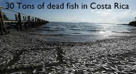 Dead Fish costa Rica