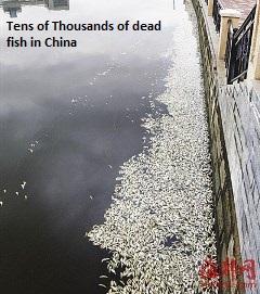 Dead Fish in Fuzhou
