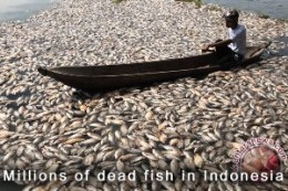 Dead Fish in Indonesia