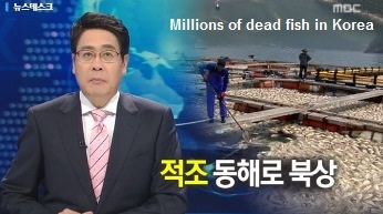 Dead Fish in Korea