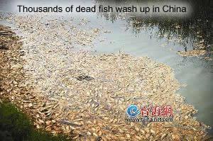 Dead Fish in Xiamen
