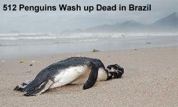512 Dead Penguins Brazil