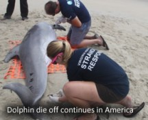 Mass Dolphin die off