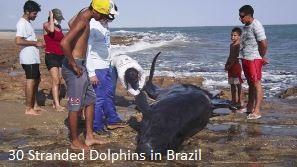 Dead Dolphins in Brazil