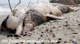 Dolphin Deaths Black Sea