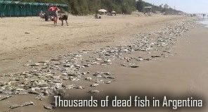 Fish dead in Argentina