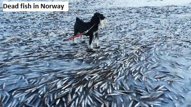 Frozen Fish in Norway
