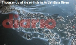 Fish Kill in Argentina