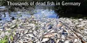 Fish kill in Germany
