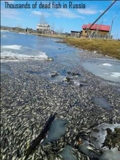 Fish kill in Russia