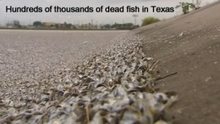 Fish Kill in Texas