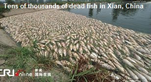 Mass Fish Kill China