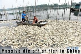 Fish kill in China