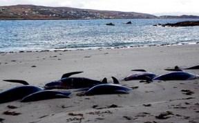 Whales Beach Ireland
