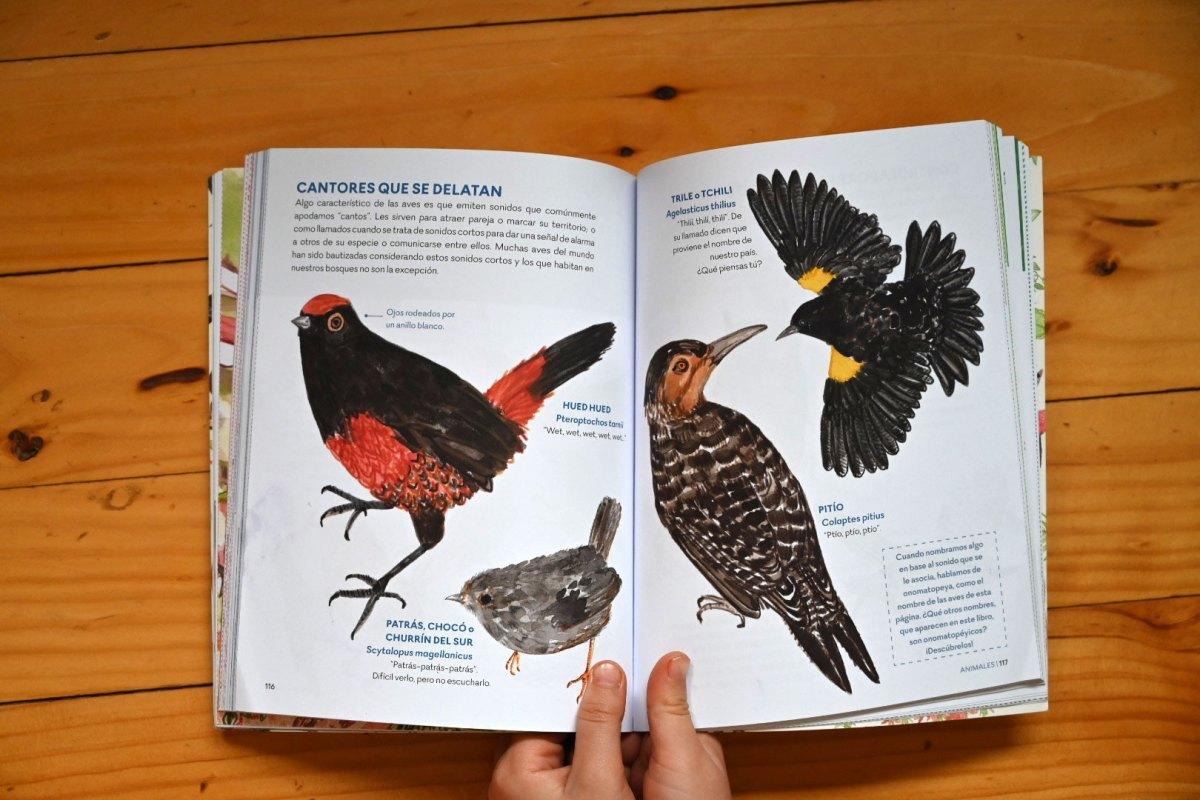Ilustración aves del bosque