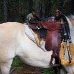 the beautiful well used Black Mountain Trail Saddle from Tuckers
