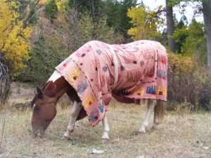 Harts new fanciful winter coat from Karen Davidson