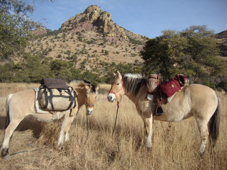 We camped here for the night, just getting started. Copper Canyon the horses had water AND green grass!