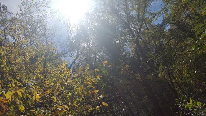 hike sunlight