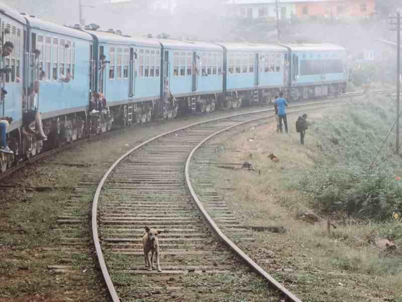 Dog on train tracks in Sri Lanka.