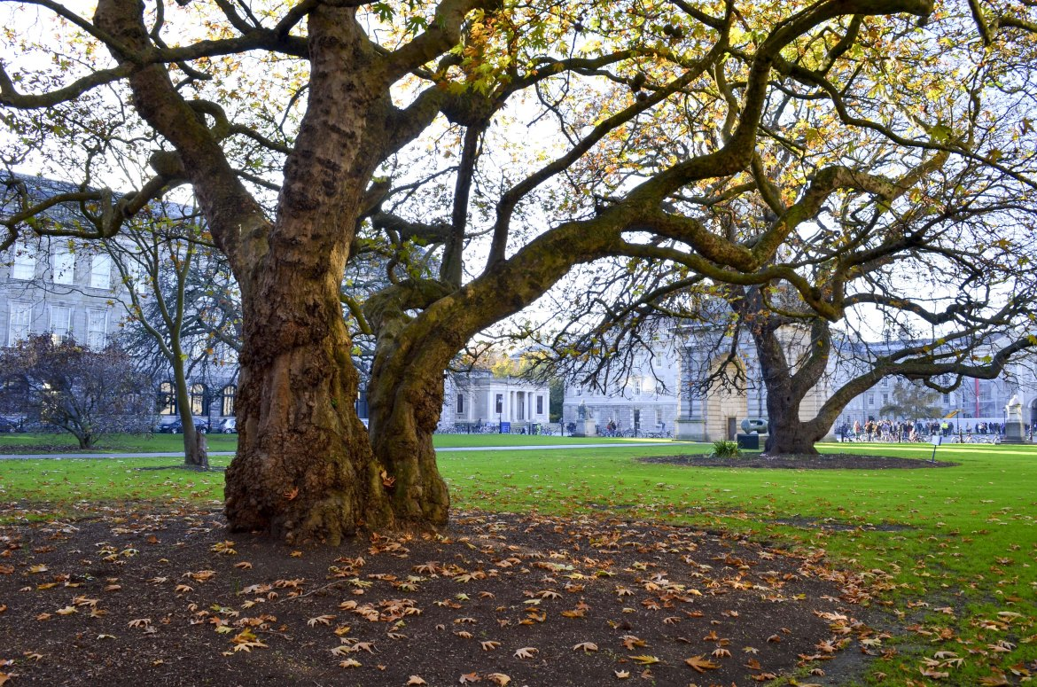 Dublin In December Travel Guide from Endless May