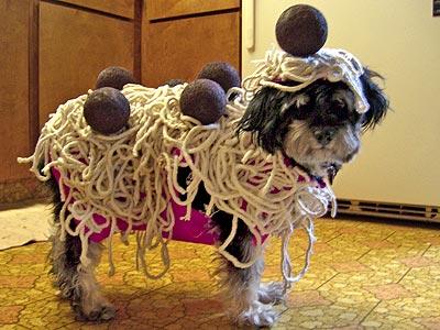 dog pasta Pitbull Weiner Dog