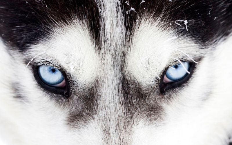 Season 2 Ep. 5: Which Wolf are You Feeding and the Benefits of Solitude