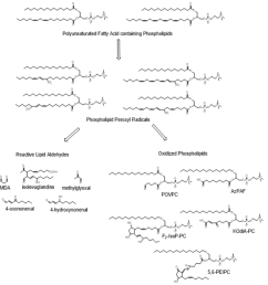 figure 7 oxidation of phospholipid polyunsaturated fatty acids oxidation of phospholipids containing polyunsaturated fatty acids present in plasma  [ 870 x 912 Pixel ]
