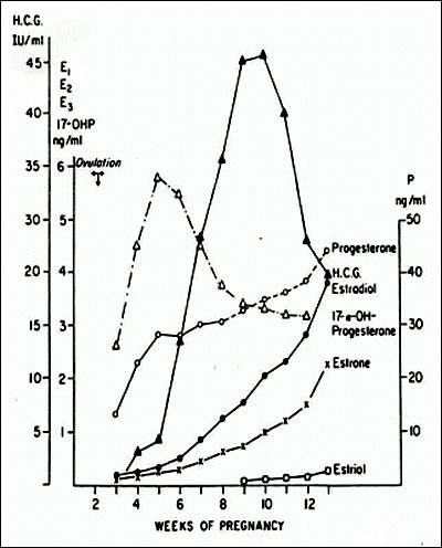 Hcg Level Ranges By Week