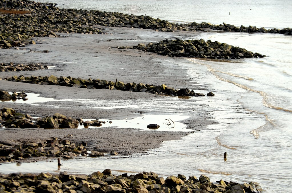Low tide on the coast. Many rocks, shells and sea life are exposed.