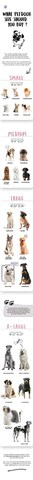 WHAT PET DOOR SIZE SHOULD YOU BUY