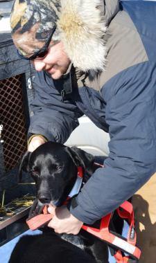 eurohound sprint racing sled dog harness