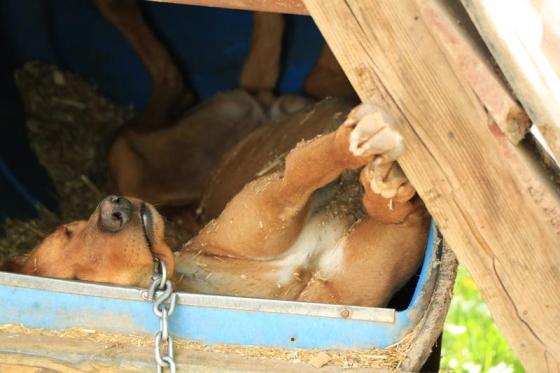 funny dog sleeping position sled