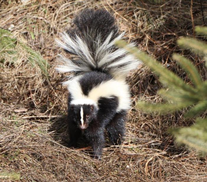 canon eos 80d skunk
