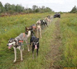 sprint-dogs-training-2