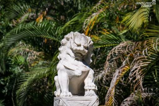 Le roi de la jungle hong-kongaise.