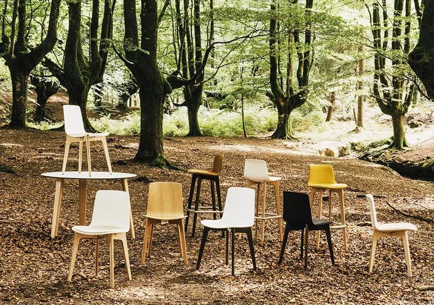 Lottus Wood  Enea