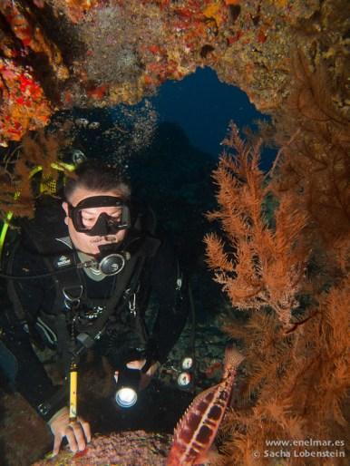 Coral negro, Juan, Teno - 08012011-2