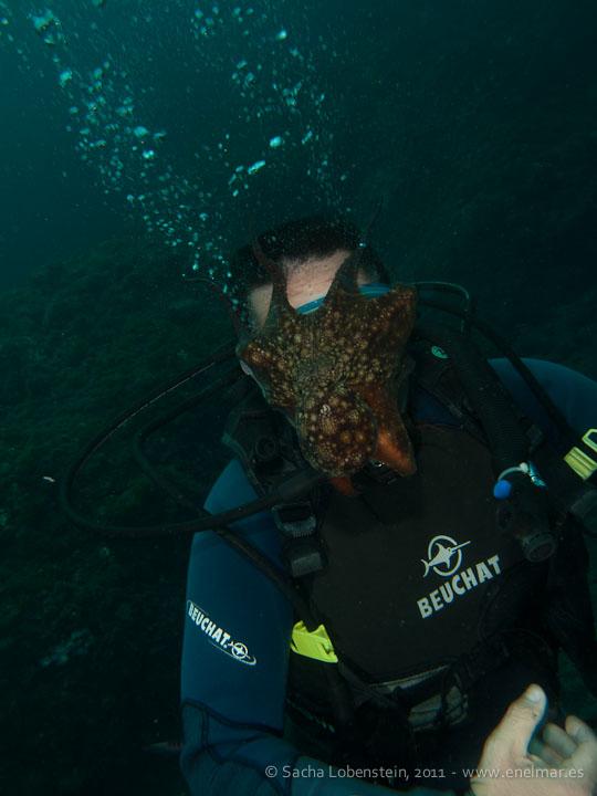 20110528 1713 - Adrián, Pulpo (Octopus vulgaris), Punta Prieta
