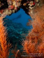 20110821 1141 - Abi, Coral negro, Teno