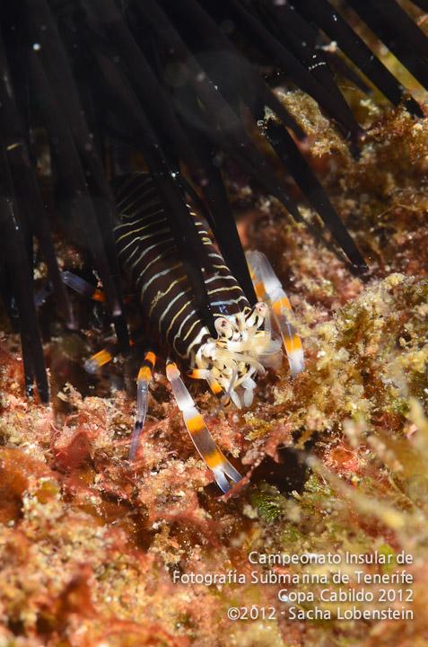 20120311 1040 - enelmar.es - MS - Macro selectivo (camarón)