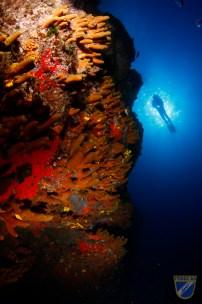 XV Copa Cabildo de Fotografía Submarina 2012 - AC - Ambiente con modelo, Iker Vildosola Gala-2