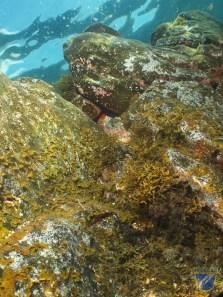 XV Copa Cabildo de Fotografía Submarina 2012 - AS - Ambiente sin modelo - Francisco Javier Martín Rodríguez