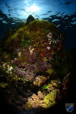 XV Copa Cabildo de Fotografía Submarina 2012 - AS - Ambiente sin modelo, Jesús Yeray Delgado Dorta-2