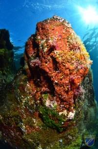 XV Copa Cabildo de Fotografía Submarina 2012 - AS - Ambiente sin modelo, Sacha Lobenstein Recio