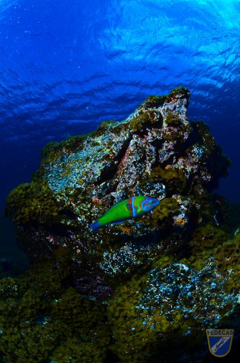 XV Copa Cabildo de Fotografía Submarina 2012 - Sacha Lobenstein Recio, AS - Ambiente sin modelo